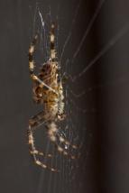 charlotte-spider-11
