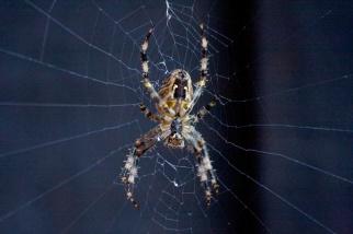 charlotte-spider-9